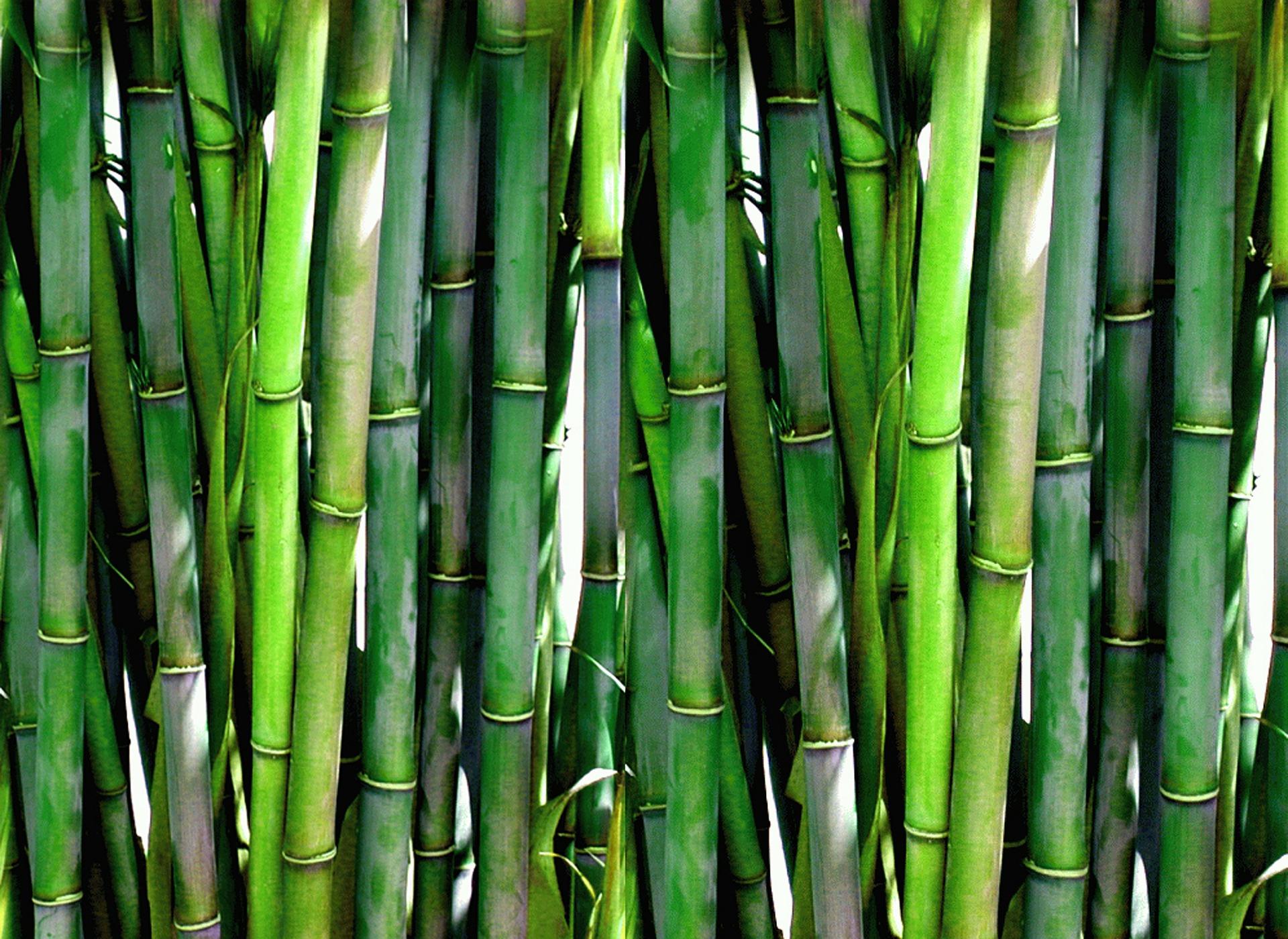 bamboo-20936_1920